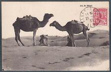 ALGERIA 01 Algérie DESERTO CAMMELLI ETHNIC ETNIQUE COSTUMES SCENES Cartolina