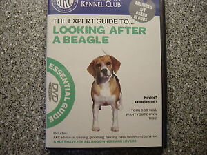 American Kennel Club Expert Guide to looking after a beagle