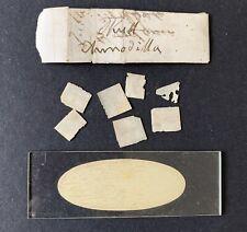 Antique Microscope Slide Specimen Packet c1870. Armadillo Skull Sections