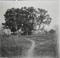 Africa Gambia ? Foto Q4 Placca Lente Stereo Positive Vintage Ca 1920