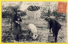 cpa Cachet St GERMAIN du BEL AIR Lot GAVEURS de TRUFFES Cochon Mushroom Pig