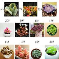Fun 60PCS Seeds Mixed Succulents Seeds Rare Succulent Potted Plant Home Decor 0#
