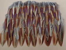 "50 Cock Pheasant Outer Wing Feathers 2.5"" - 4.5"" - Crafting,  Dream Catcher"