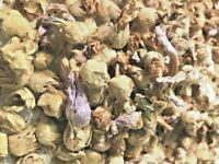 ((Marshmallow Flowers)) 100% Natural Aromatic Herb - From Althaea Officinalis!