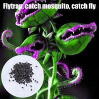 50Pcs Dionaea Samen Muscipula Riesen Clip Venusfliegenfalle Insectivorou Seeds