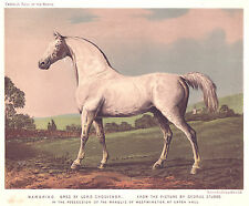 Original Antique Chromolithograph from CASSELLS - HORSE 'MAMBRINO' after Stubbs