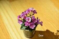 Microminiature African Violet Sk First Love - Starter Plant