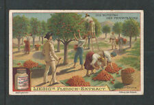 1907 FRUIT TREES ORANGE S0878 LIEBIG VICTORIAN ADVERTISING CARD