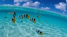 "Caribbean Fish Underwater Landscape- 42"" x 24"" LARGE WALL POSTER PRINT NEW."