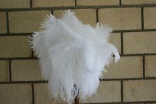 White wing duster display 55cm overall wood stained handle first grade