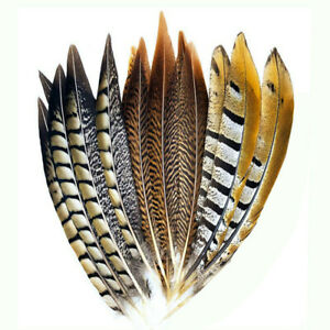 10pcs 10-12 inches/25-30 cm high quality various natural pheasant tail feathers