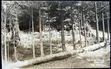 HARTSOOK CA ~ 1920's THE NEVER DYING REDWOOD ~ PATTERSON Real Photo PC  RPPC