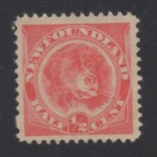 NEWFOUNDLAND STAMP #57 --  1/2c DOG -- ORANGE RED COLOR - 1896 - UNUSED