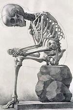 "12""x18"" Vintage Medical Human Skeleton Anatomy Chart Real Canvas Art Print"