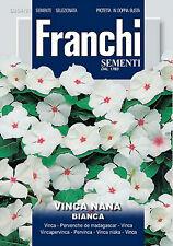 40 Semi/Seeds VINCA Nana Bianca
