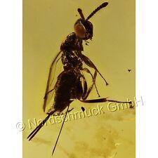 Bernstein Inkluse Inklusen Einschluss Insekt, Taillenwespe (Apocrita) IN179