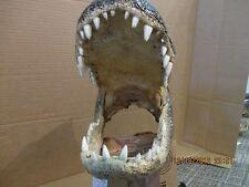 aligator heads