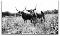 POSTCARD West Texas Longhorns Steers Cows Ranch Black White
