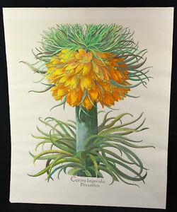 Basil Besler Corona Imperialis Polyanthos Botanical Litho 1977 Reproduction