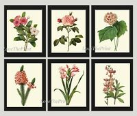 Unframed Botanical Print Set of 6 Antique Pink Flowers Garden Vintage Wall Art