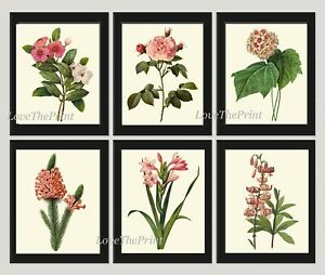 Unframed Botanical Print Set of 6 Antique Pink Flowers Garden Vintage Wall Art