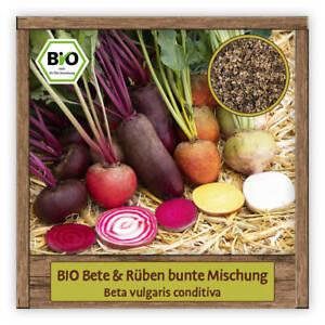 BIO bunte Rüben & rote Beete Samen Saatgut Mischung seltene Gemüsesamen Sorten