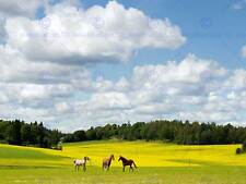 LANDSCAPE HORSES FIELD GREEN PHOTO ART PRINT POSTER PICTURE BMP1175A