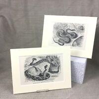 1894 Original Victorian Prints Reptiles Snakes Rattle Snake Antique
