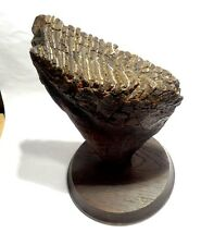 DENT DE MAMOUTH FOSSILISEE 2 MILLIONS D'ANNEES - FOSSILIZED MAMMOTH TOOTH