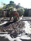 20 gousses de Vanille Bourbon 15/16 origine Madagascar 2020 direct productrice