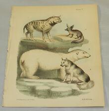 1850 Antique COLOR Print/STRIPED HYAENA, ESQUIMAUX DOG, CAPE FENNEC, POLAR BEAR