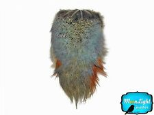 Pheasant Feathers 1 Natural Ringneck Pheasant Feather Complete Rump Patch