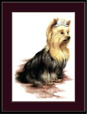English Picture Print Pet Yorkshire Terrier Dog  Art