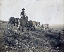 "The Stray Cowboy, Bonham, Texas, antique western photo, Erwin, 20""x16"" Photo"