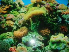 Vinyl Aquarium/ Fish Tank Backing
