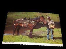 Vintage Postcard, COWBOY WITH HIS HORSE & HIS HUGH RAINBOW TROUT, Big Catch, BC