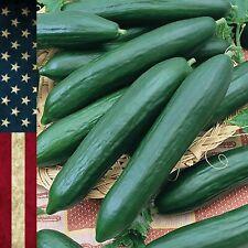 Seeds 30+ Cucumber Tendergreen Burpless Non-GMO Vegetable