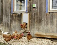 Kerbl automatische Hühnertür