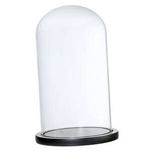 Glass Display Dome Cloche Bell Jar With Wooden Base for DIY Decoration PICK