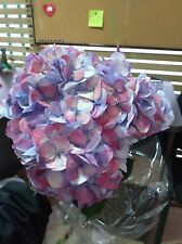 Premium Jumbo Hydrangea / 16 stems / Grower Direct / Quality Guaranteed