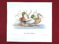 1985 R.L. KOTHENBEUTEL signed art print LAZY DAY - WOOD DUCKS limited edition