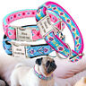 Personalized Dog Collars for Big Dogs Soft Padded Custom Pet Dog ID Collar Tag