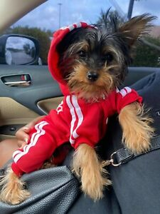 Dog clothing for small and medium breeds. We have multi colors ....