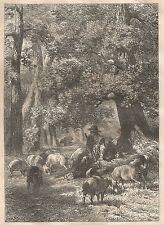 A4788 Gregge di Pecore - Ghiande - Pastore - Incisione antica 1864 - Engraving