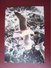 Gulls - Birds  - Collectacard  J.Arthur Dixon  4 x 6  inch