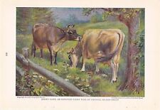 1925 Jersey Cow - Cattle of the World Edward Herbert Miner Vintage Cow Print