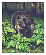 "22 ""Bracken Hollow"" Black Bear 16x20 Canvas Print by Robert Metropulos"