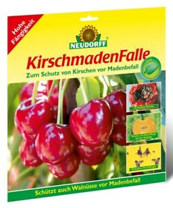 Neudorff Kirschmaden Falle (enthält 7 Fallen) gegen Maden Kirschfliegen