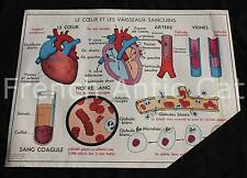 Affiche scolaire vintage MDI 11 12 coeur vaisseaux sanguins sang deglutition
