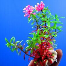"New listing 6x Aquarium Plastic Plants 4.3""L - Ornament Decoration fish tank plant 021061"